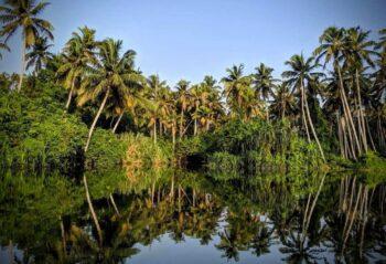 Poovar Island Resort 4* 01.05.21-15.05.21, 14 ночей !!! Групповой заезд на аюрведу. Индия, Керала
